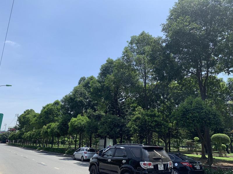 Hàng cây sao đen đầu tiên được trồng ở công viên Bạch Đằng, nay đã cao lớn, thẳng tắp.