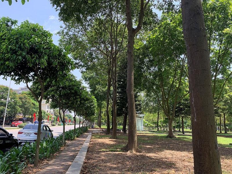 Những cây sao đen đầu tiên được Chủ tịch Quốc hội Nguyễn Thị Kim Ngân trồng sinh trưởng và phát triển tốt.