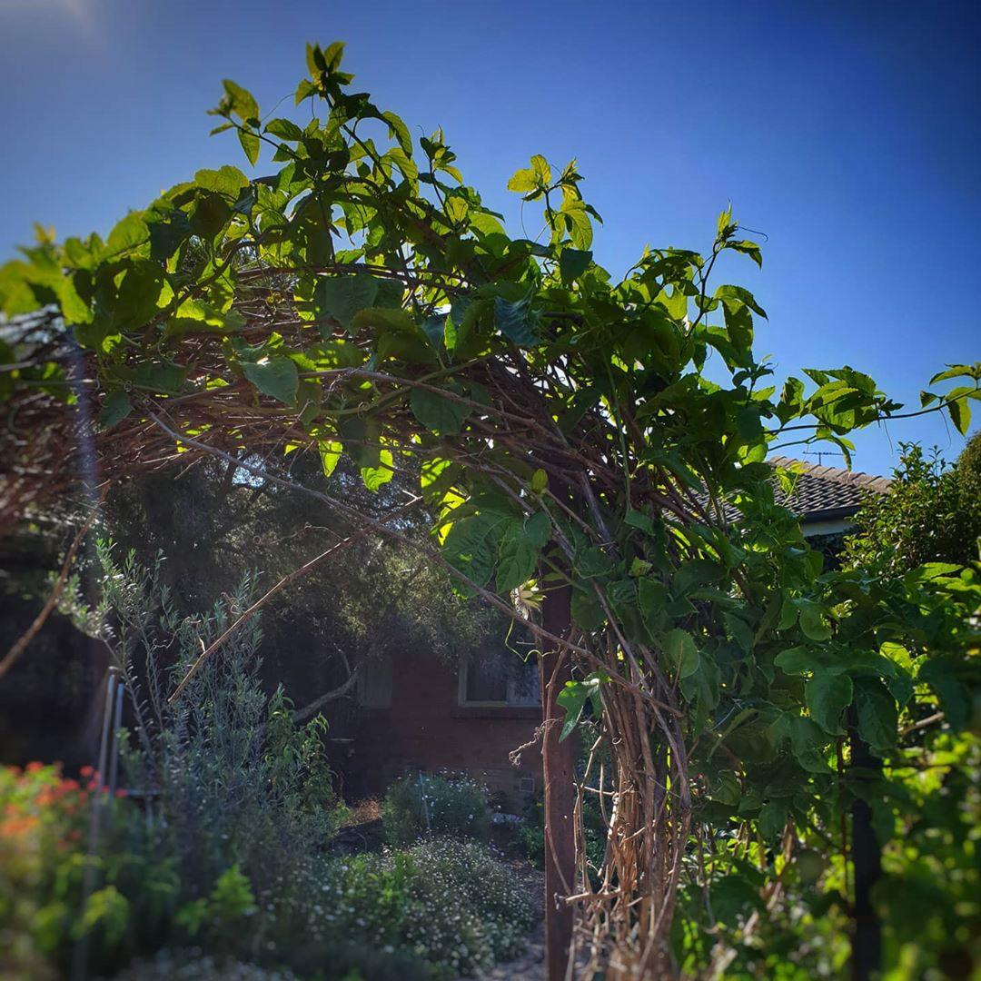 Khu vườn ngoại ô đầy nắng và rau quả sạch của gia đình hai vợ chồng cùng 5 người con - Ảnh 2.