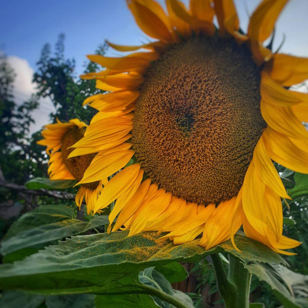 Khu vườn ngoại ô đầy nắng và rau quả sạch của gia đình hai vợ chồng cùng 5 người con - Ảnh 11.