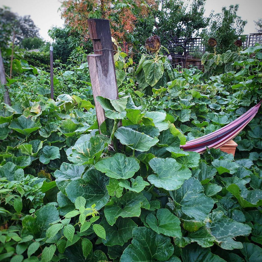Khu vườn ngoại ô đầy nắng và rau quả sạch của gia đình hai vợ chồng cùng 5 người con - Ảnh 7.