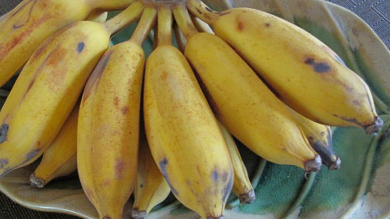 Phụ nữ chăm chỉ ăn 10 loại quả này có thể kích thích cơ thể tự sản sinh collagen, loại bỏ nếp nhăn trên khuôn mặt và khỏe mạnh mỗi ngày - Ảnh 6.