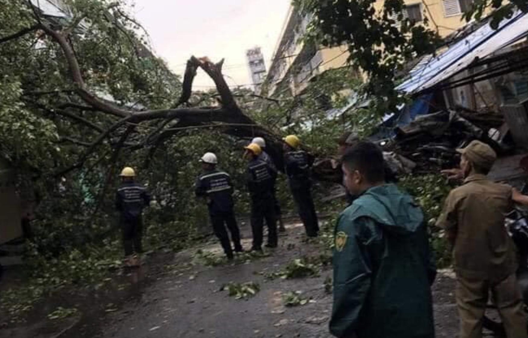 TP.HCM: Sau cơn mưa lớn kèm gió giật, nhiều cây xanh lại gãy đổ đè nhà dân, đè cả người đi đường
