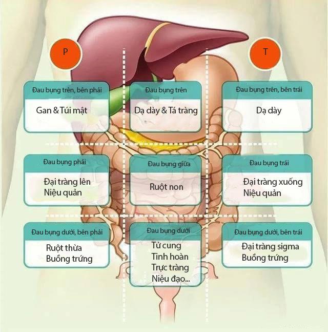 Đau bụng không nhất thiết là vấn đề về đường tiêu hóa: Nếu bị đau ở những 8 vị trí này trên bụng, bạn phải cảnh giác ngay - Ảnh 1.
