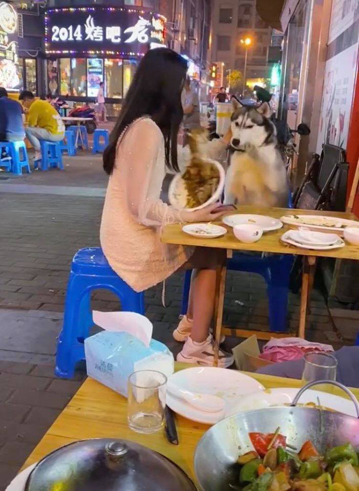 Đùa nghịch với chó lạ, cô gái phớt lờ cảnh báo của người chủ và cái kết ê chề giữa quán - Ảnh 8.