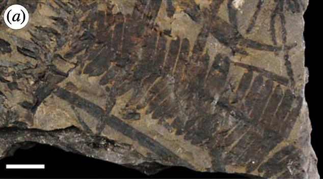 Phát hiện bữa ăn được bảo quản nguyên vẹn trong dạ dày khủng long bọc giáp sống cách đây 110 triệu năm - Ảnh 2.