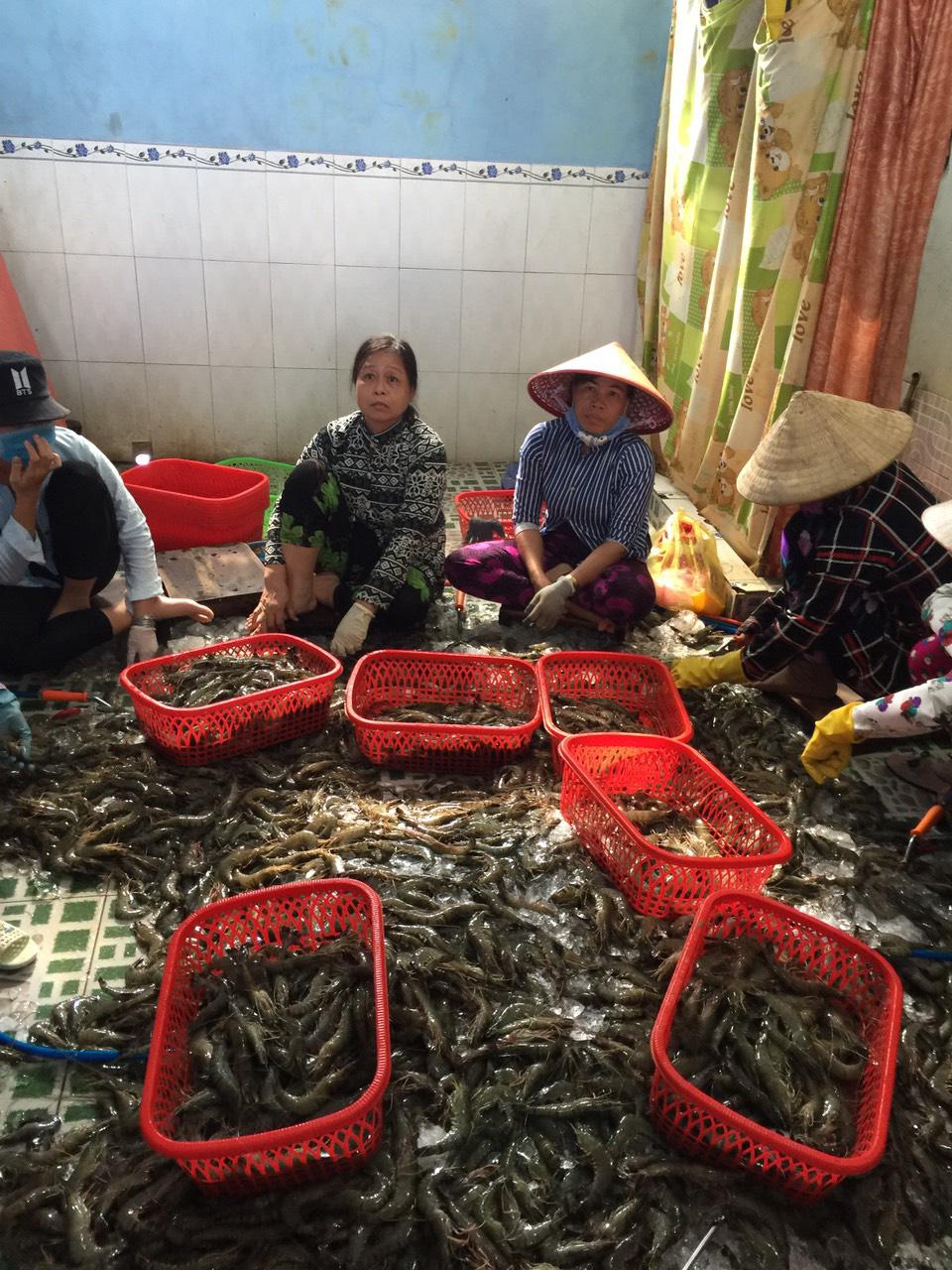 Bắt quả tang cơ sở đang đưa tạp chất vào tôm nguyên liệu tại Kiên Giang - Ảnh 1.
