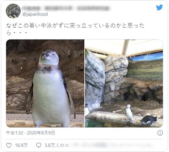 Khách tham quan thủy cung Nhật Bản thấy chú chim cánh cụt đứng bất động như hóa đá, nhìn lên trần nhà mới vỡ lẽ lý do - Ảnh 2.