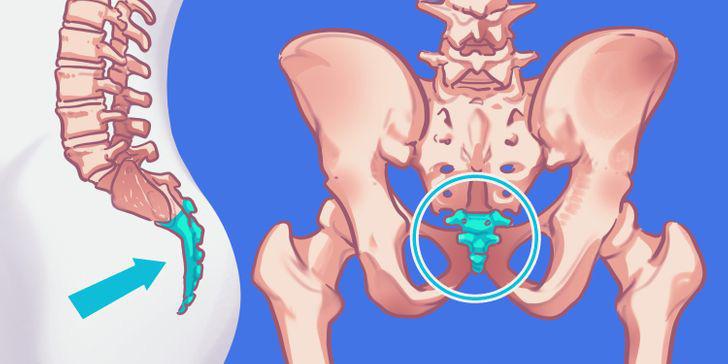 9 bộ phận vô dụng đến thảm thương trên cơ thể chúng ta, nhưng lại là bảo chứng sinh tồn của quá trình tiến hóa - Ảnh 3.