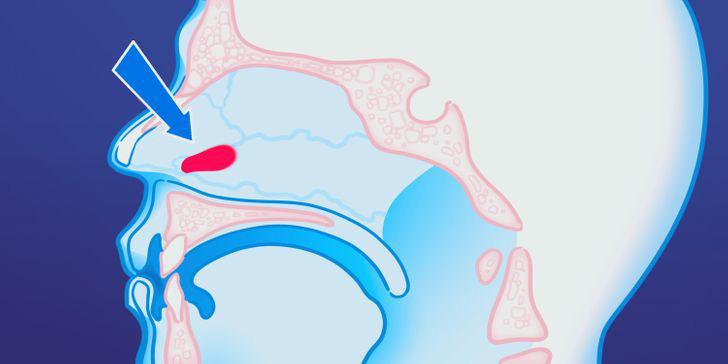 9 bộ phận vô dụng đến thảm thương trên cơ thể chúng ta, nhưng lại là bảo chứng sinh tồn của quá trình tiến hóa - Ảnh 4.