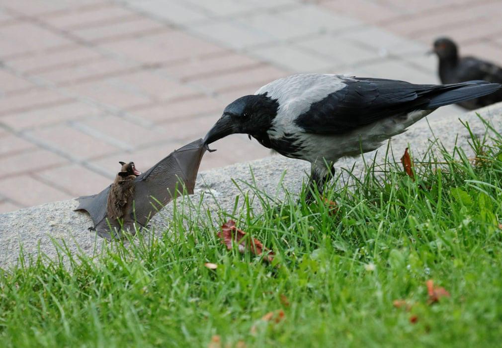 24h qua ảnh: Chim quạ tấn công dơi giữa phố ở Ukraine - Ảnh 2.