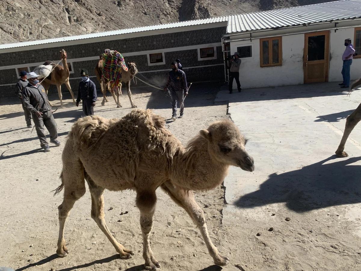 Ấn Độ triển khai kế hoạch ấp ủ hơn 3 năm cho binh sĩ biên giới: Nhận thêm lạc đà, hổ mọc thêm cánh? - Ảnh 1.