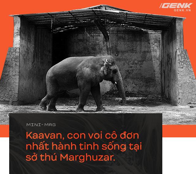 Nhờ sức mạnh của tiếng hát, con voi cô độc nhất hành tinh tìm thấy tự do cho mình sau nhiều thập kỷ sống trong xiềng xích - Ảnh 1.