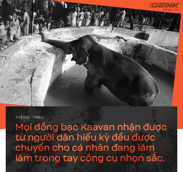 Nhờ sức mạnh của tiếng hát, con voi cô độc nhất hành tinh tìm thấy tự do cho mình sau nhiều thập kỷ sống trong xiềng xích - Ảnh 7.