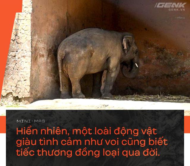 Nhờ sức mạnh của tiếng hát, con voi cô độc nhất hành tinh tìm thấy tự do cho mình sau nhiều thập kỷ sống trong xiềng xích - Ảnh 8.