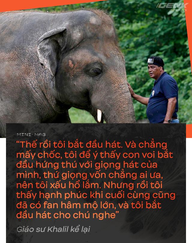Nhờ sức mạnh của tiếng hát, con voi cô độc nhất hành tinh tìm thấy tự do cho mình sau nhiều thập kỷ sống trong xiềng xích - Ảnh 11.