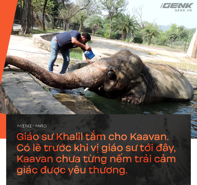 Nhờ sức mạnh của tiếng hát, con voi cô độc nhất hành tinh tìm thấy tự do cho mình sau nhiều thập kỷ sống trong xiềng xích - Ảnh 12.