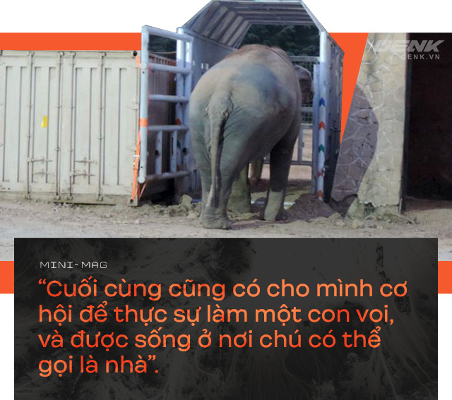 Nhờ sức mạnh của tiếng hát, con voi cô độc nhất hành tinh tìm thấy tự do cho mình sau nhiều thập kỷ sống trong xiềng xích - Ảnh 13.