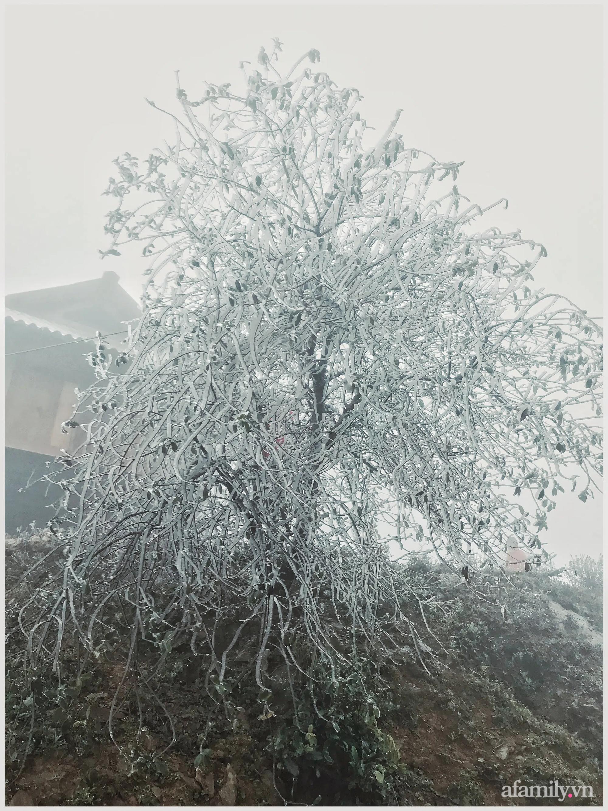Mê mẩn ngắm nhìn những cành đào vừa chớm nở bị đóng băng ở Tà Xùa - Ảnh 11.