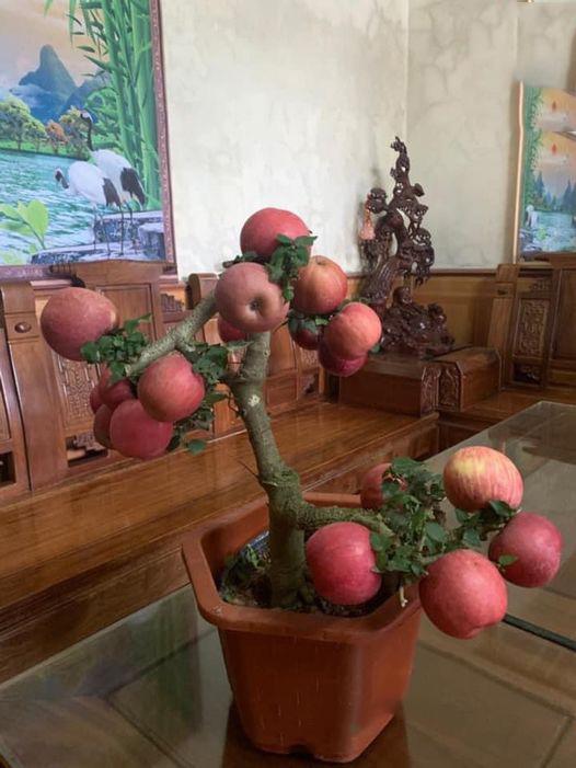 """Chán đào, quất ngày Tết, dân mạng """"đổi gió"""" sang chơi loạt cây bonsai chất lừ: Củ cải khổng lồ nở hoa tím biếc, táo lùn """"pha-ke"""" chi chít quả đỏ - Ảnh 1."""