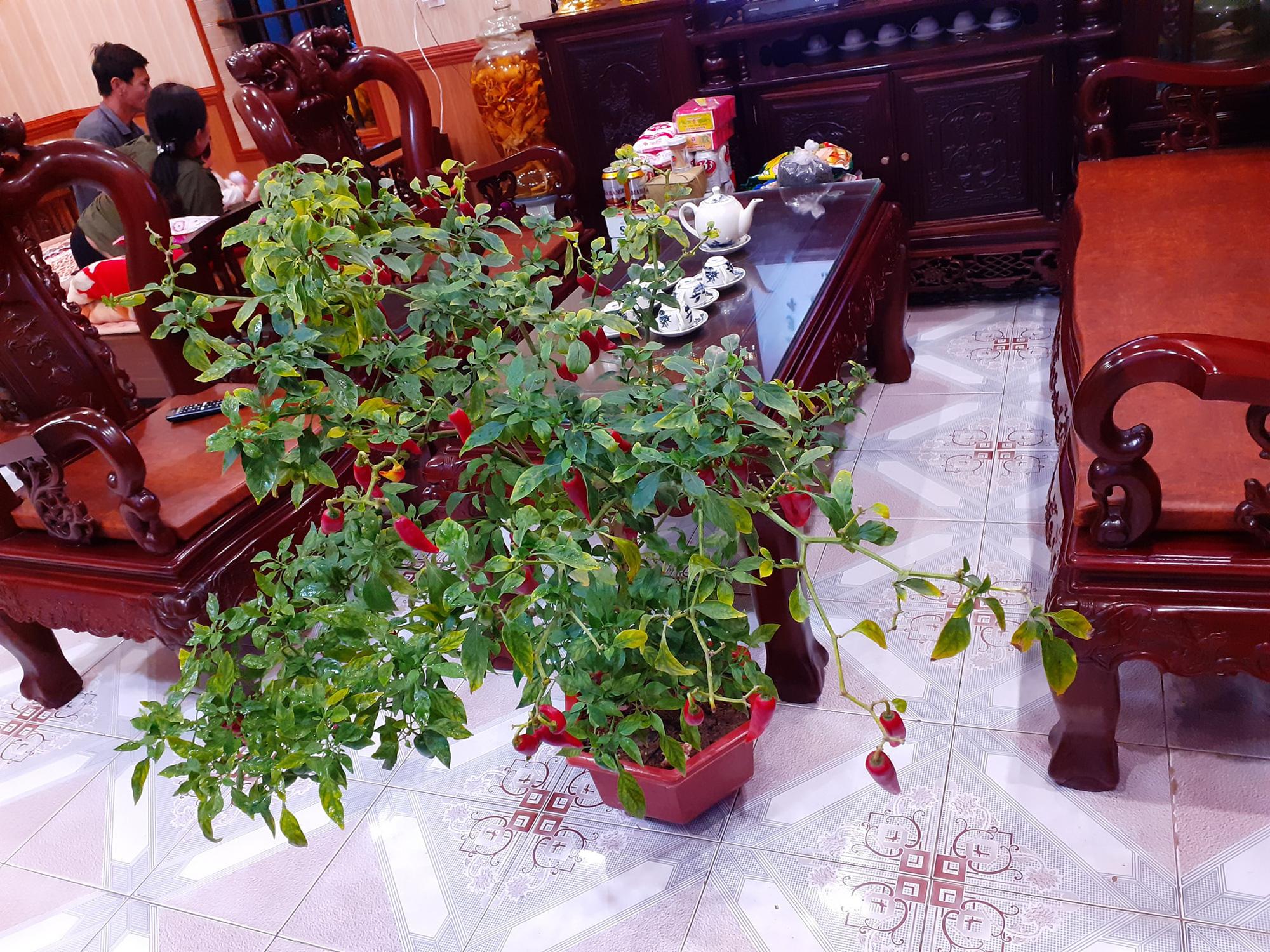 """Chán đào, quất ngày Tết, dân mạng """"đổi gió"""" sang chơi loạt cây bonsai chất lừ: Củ cải khổng lồ nở hoa tím biếc, táo lùn """"pha-ke"""" chi chít quả đỏ - Ảnh 4."""