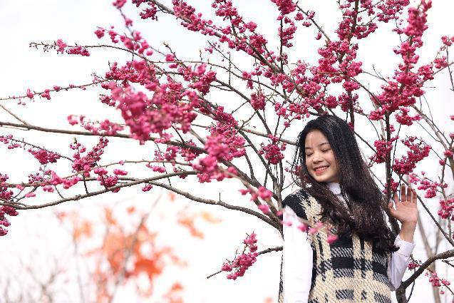 Sun World Fansipan Legend: Anh đào Nhật Bản nở rộ, đẹp như chốn Phù Tang - Ảnh 4.