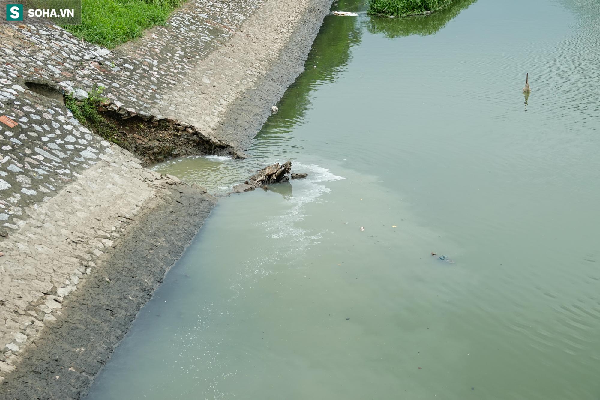 [ẢNH] Cận cảnh dòng nước xanh ngắt hiếm thấy tại sông Tô Lịch, cá bơi nhộn nhịp hàng đàn - Ảnh 11.