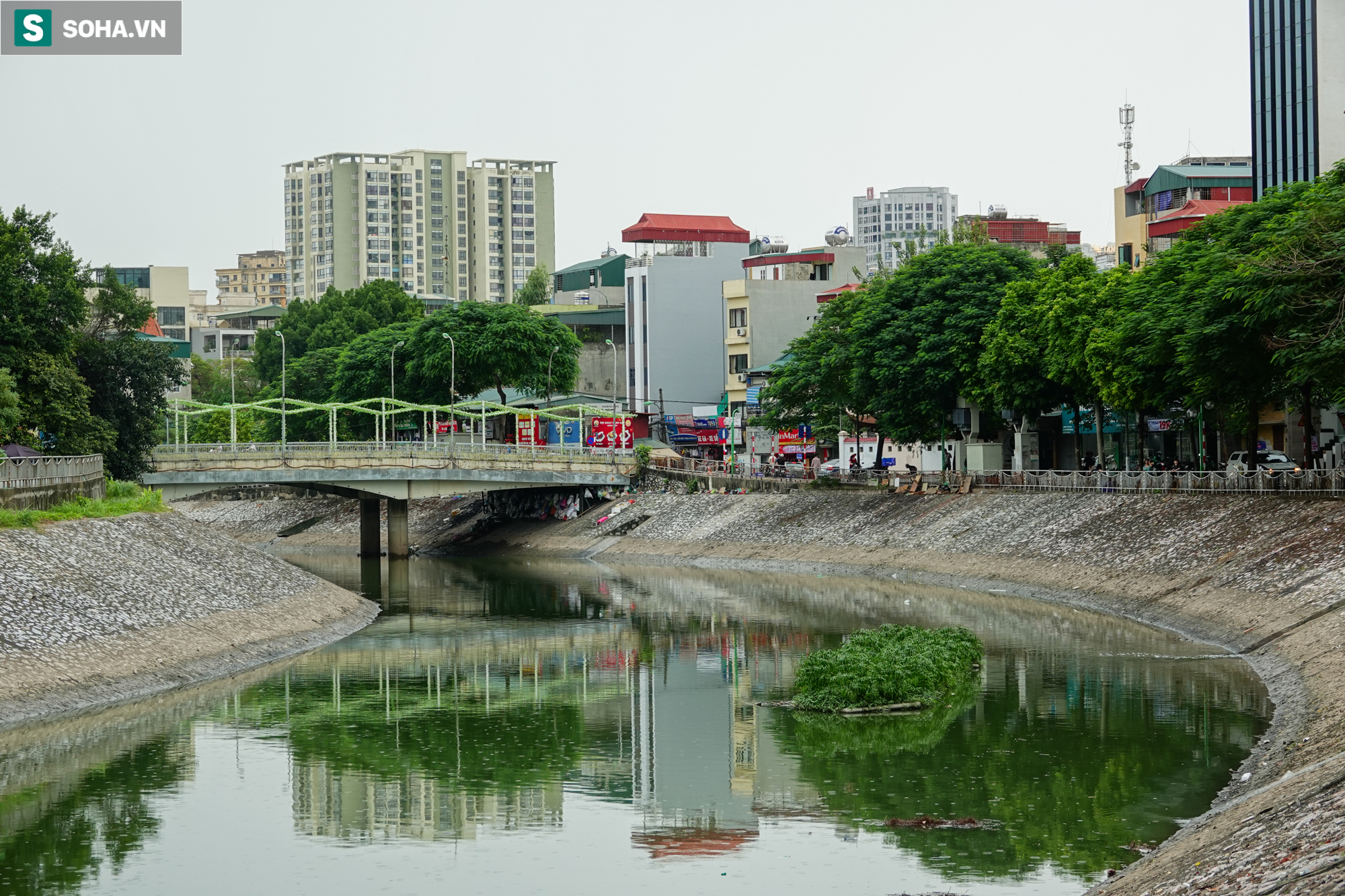[ẢNH] Cận cảnh dòng nước xanh ngắt hiếm thấy tại sông Tô Lịch, cá bơi nhộn nhịp hàng đàn - Ảnh 4.