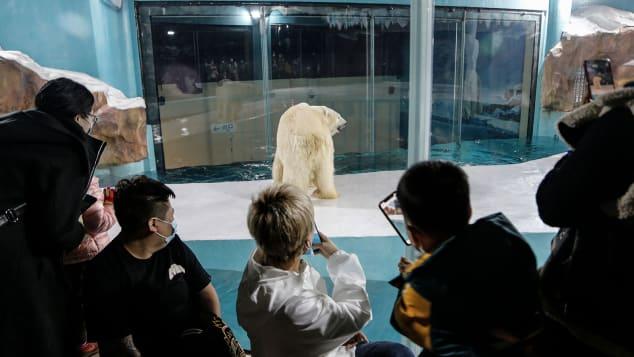 Bất ngờ xuất hiện khách sạn gấu Bắc Cực đầu tiên trên thế giới  - Ảnh 2.