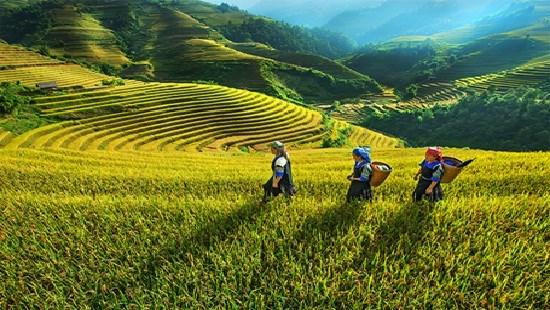 Kiện toàn Ban chỉ đạo Trung ương Chương trình Mục tiêu quốc gia phát triển kinh tế xã hội vùng đồng bào dân tộc thiểu số, miền núi  - Ảnh 1.