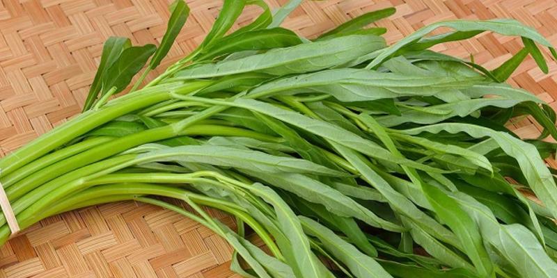 Lời đồn về rau muống hút thuốc trừ sâu và nhiễm kim loại nặng: Ăn lâu dài có gây bệnh không? - Ảnh 4.