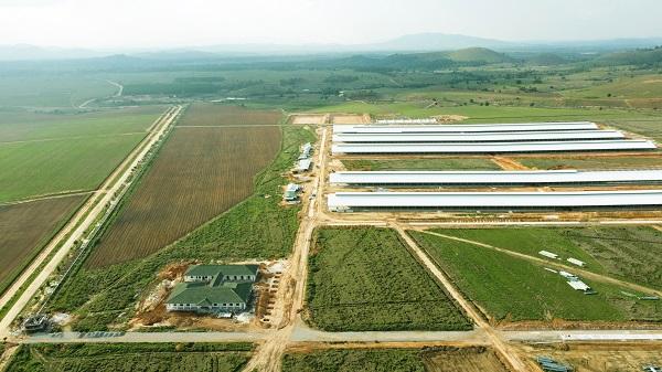Tổ hợp trang trại tại Lào của Vinamilk đẩy nhanh tiến độ hoàn thành giai đoạn 1 - Ảnh 1.