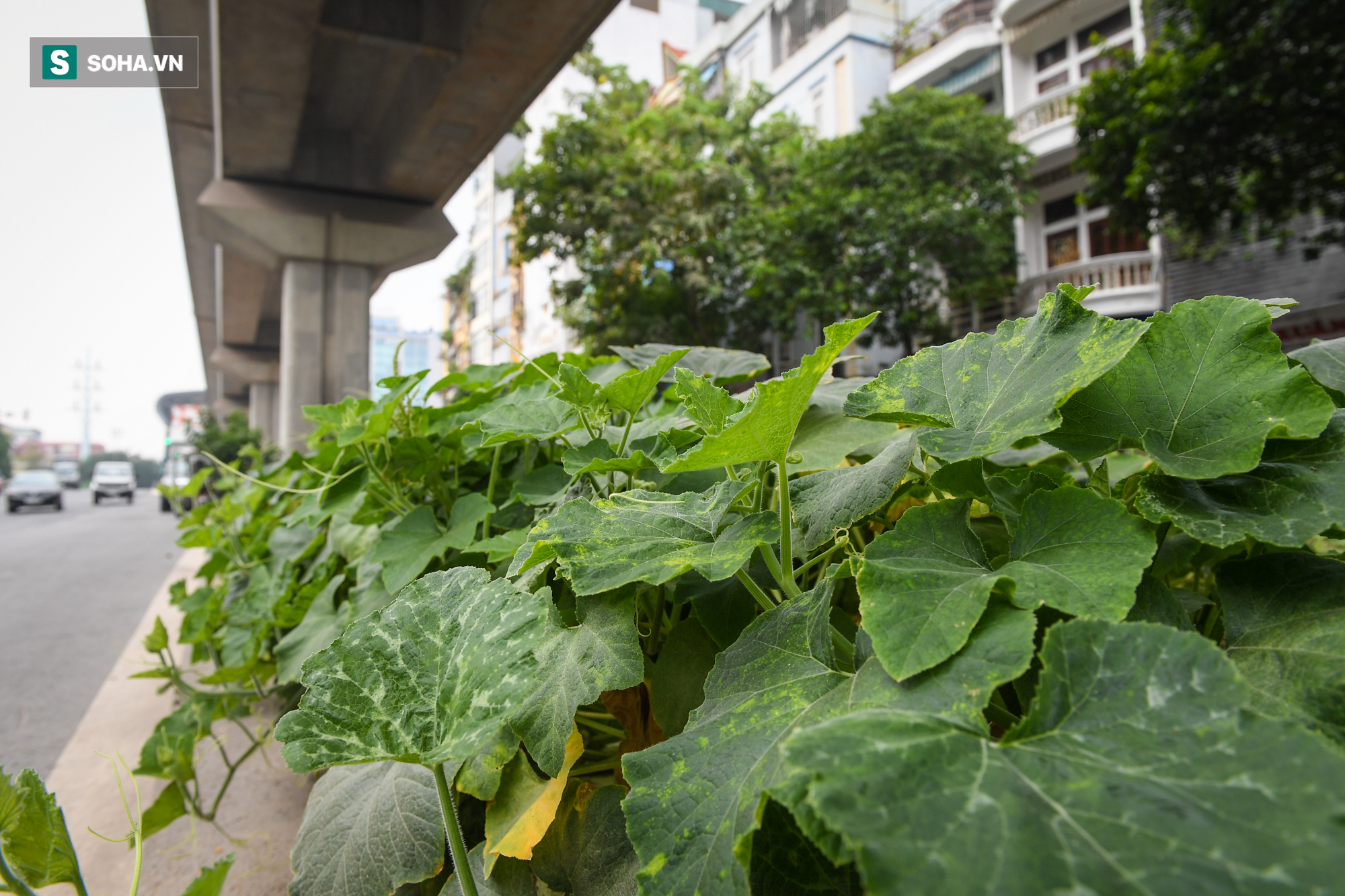 Đường sắt Cát Linh-Hà Đông 18.000 tỷ đồng chưa hẹn ngày khai thác: Người dân tận dụng không gian để nuôi chó, trồng rau - Ảnh 4.