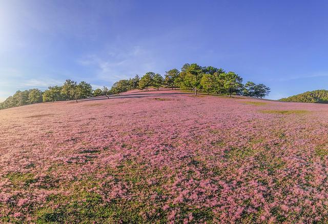 Hãy tới Lâm Đồng chụp ảnh miễn phí với đồi cỏ hồng Lang Biang 2018  - Ảnh 1.