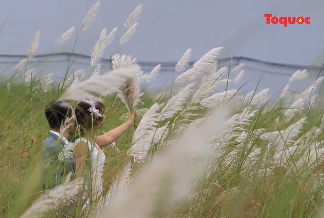 Mê mẩn mùa lau trắng ở Đà Nẵng  - Ảnh 12.