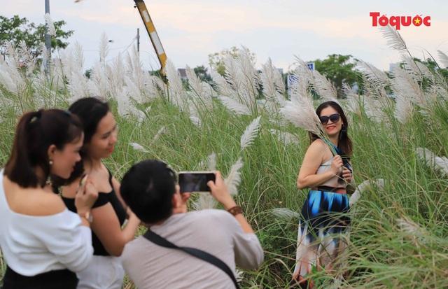 Mê mẩn mùa lau trắng ở Đà Nẵng  - Ảnh 9.