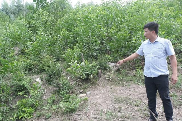 Sở Tài nguyên và Môi trường Đà Nẵng lên tiếng về dự án lò đốt rác của Quảng Nam   - Ảnh 2.