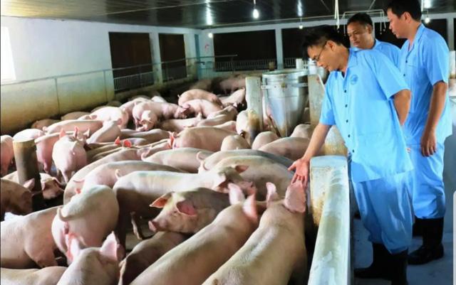 Triển khai một số giải pháp cấp bách trong phòng, chống bệnh Dịch tả lợn Châu Phi - Ảnh 1.