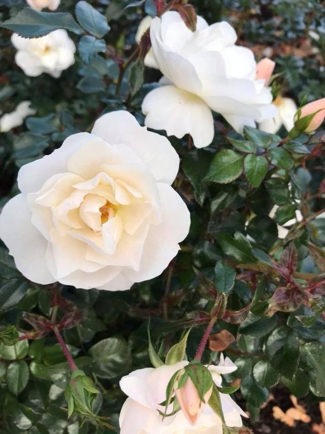 Căn biệt thự ngập tràn hoa và cây ăn quả của nữ ca sĩ Vy Oanh - Ảnh 18.