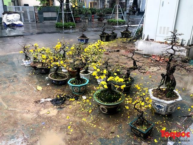 Hà nội đổ mưa lớn: Đào, quất giảm giá mạnh ngày 30 Tết, cây đào giá cả triệu bạc biến thành củi chỉ sau 1 ngày - Ảnh 8.