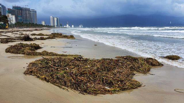 Bờ biển Đà Nẵng rác thải tràn ngập sau bão Molave - Ảnh 9.