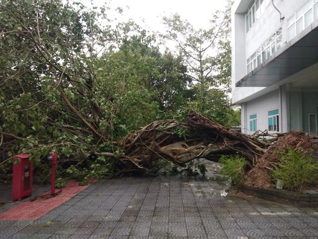Những hình ảnh thiệt hại ban đầu ở Đà Nẵng và Thừa Thiên Huế do bão Vamco, Quảng Bình di dời hàng trăm hộ dân tránh bão - Ảnh 4.