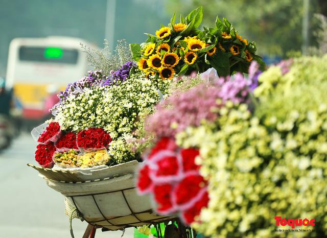 """Cúc Họa mi """"xuống phố"""" mang gió đông về khắp phố phường Hà Nội - Ảnh 1."""