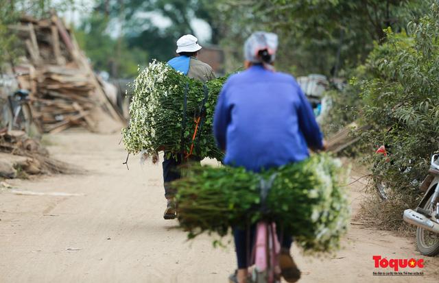 """Cúc Họa mi """"xuống phố"""" mang gió đông về khắp phố phường Hà Nội - Ảnh 10."""