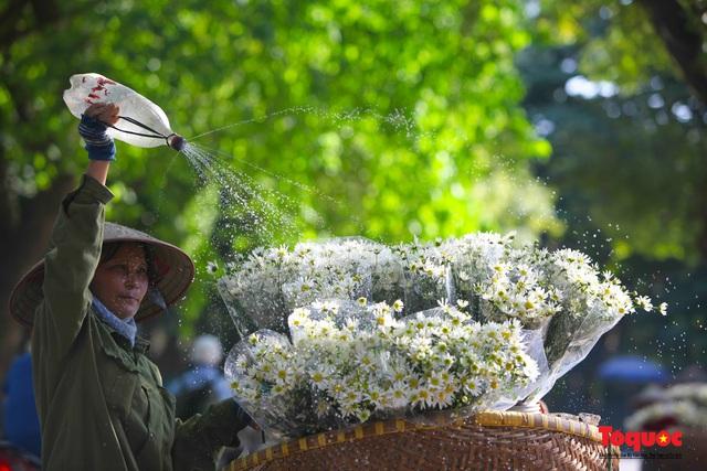 """Cúc Họa mi """"xuống phố"""" mang gió đông về khắp phố phường Hà Nội - Ảnh 18."""