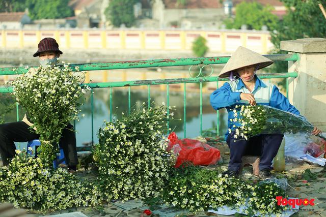 """Cúc Họa mi """"xuống phố"""" mang gió đông về khắp phố phường Hà Nội - Ảnh 11."""