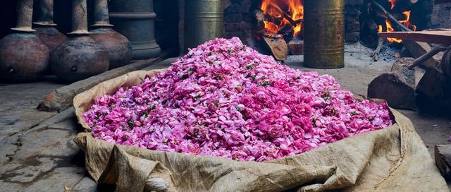 Một thị trấn cổ Ấn Độ ngập tràn hương thơm của hoa hồng - Ảnh 1.