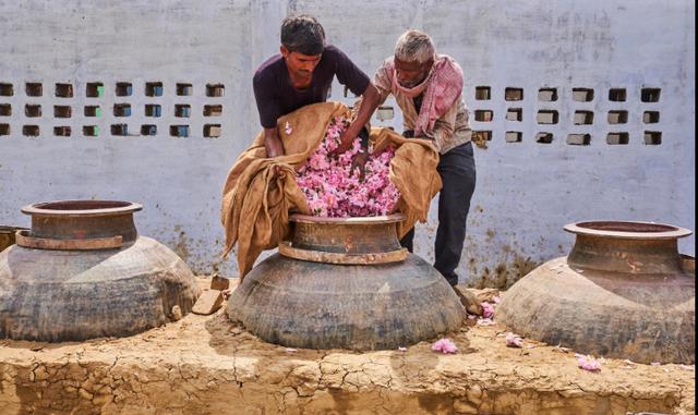 Một thị trấn cổ Ấn Độ ngập tràn hương thơm của hoa hồng - Ảnh 2.
