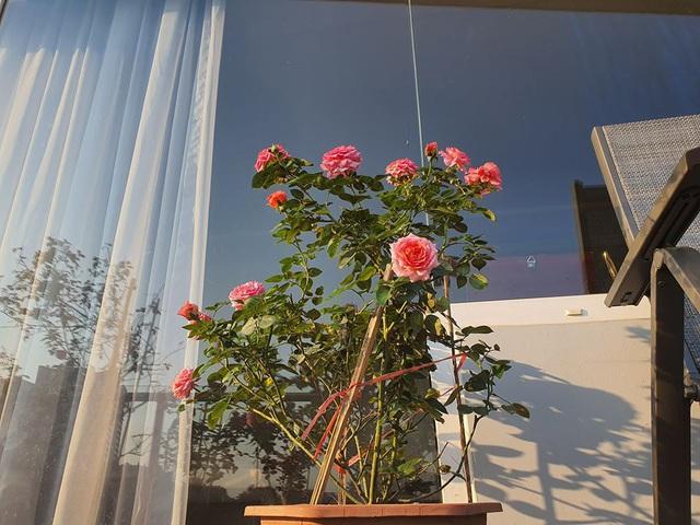 Khu vườn ngập sắc hoa trong biệt thự của Vũ Thu Phương - Ảnh 1.