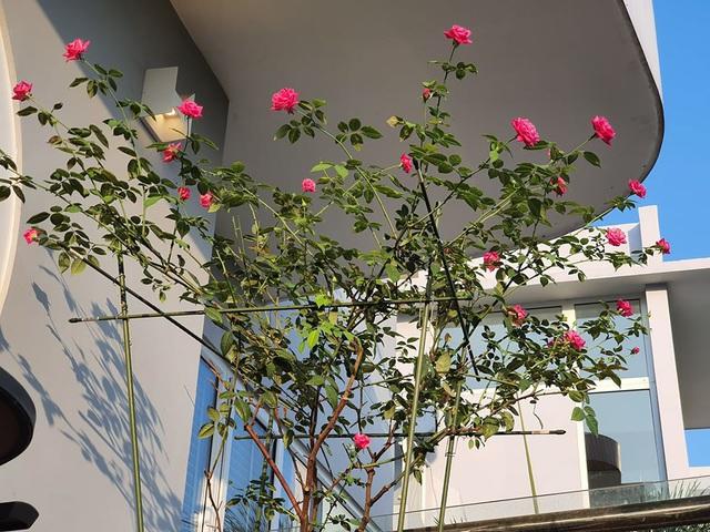 Khu vườn ngập sắc hoa trong biệt thự của Vũ Thu Phương - Ảnh 3.